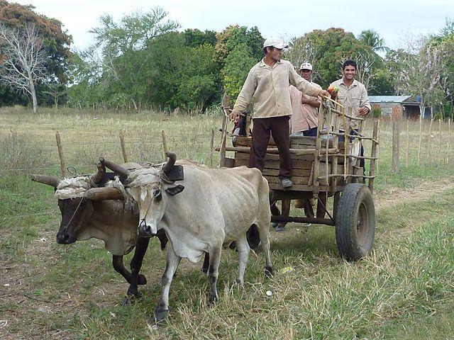 640px-Ox_cart_in_Cuba